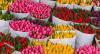 DOMILĖJA, UAB - didmeninė prekyba gėlėmis Klaipėdoje