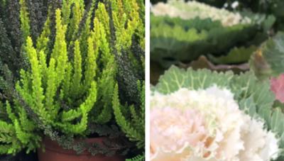 Gėlių ir suvenyrų parduotuvė Jiezne