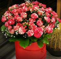 ALMANA, MB - skintos gėlės, vazoninės gėlės, puokštės Antakalnyje