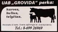 GROVIDA, UAB -  galvijų, karvių, telyčių, bulių supirkimas Šilalė, Šilutė, Telšiai, Plungė, Kelmė