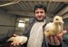 KOCHANAUSKŲ PAUKŠČIŲ ŪKIS - viščiukai, žąsiukai, ančiukai, dėdeklės